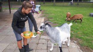 keurmerk diervriendelijke kinderboerderij